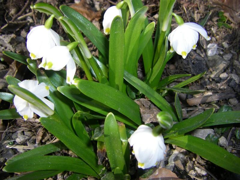 Frühlingserwachen für 2 Pers. A2